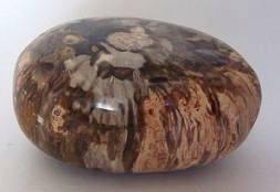 edelstenen en mineralen versteend hout
